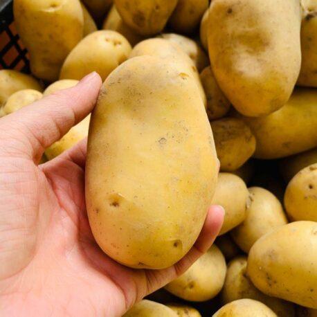 vendita patate cuneo azienda sativus